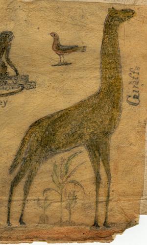hawkins-giraffe