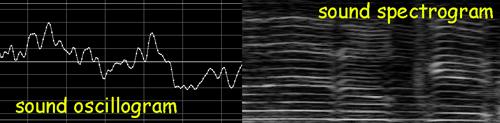 oscillogram-vs-spectrogram