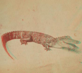 224-anaglyph