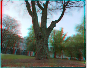 campus-tree-yearlong-anaglyph