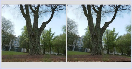 campus-tree-yearlong-stereocard